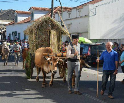 Câmara de Torres Novas apoia Festa da Bênção do Gado com 80 mil euros