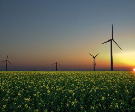 2019 foi o ano em que as renováveis despertaram e as emissões baixaram mais