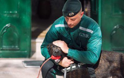 GNR recupera dois cães desaparecidos em Santarém há mais de um ano