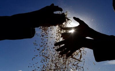 PDR2020 vai abrir avisos de cerca de 178 ME para medidas e apoios na agricultura