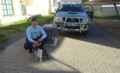 GNR recupera na Chamusca cadela dada como desaparecida em Gondomar