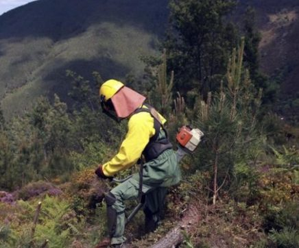 Incêndios: 45 freguesias prioritárias para limpeza no distrito de Santarém