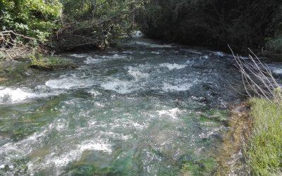 VÍDEO   Rio Alviela como há muito tempo não se via, com água limpa e sem poluição