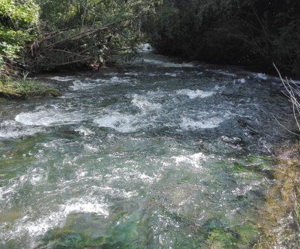 VÍDEO | Rio Alviela como há muito tempo não se via, com água limpa e sem poluição