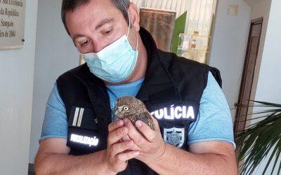 PSP resgata cria de Mocho Galego