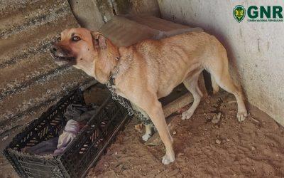 Homem identificado pela GNR por maus tratos a animal de companhia
