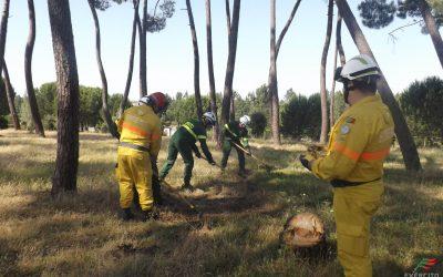 Meia centena de militares participam em acção de formação de combate a incêndios rurais