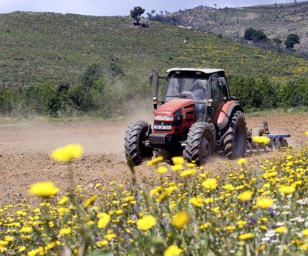 Jovens agricultores podem candidatar-se até Setembro a ajudas no valor global de 2 ME