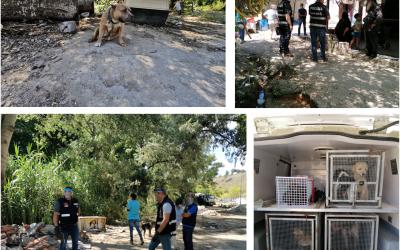 PSP e serviços veterinários de Tomar recolhem oito cães