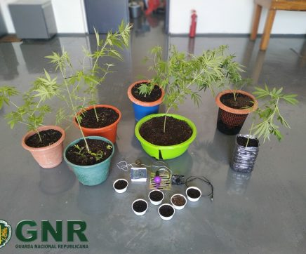 Jovem de 19 anos detido por cultivo de cannabis