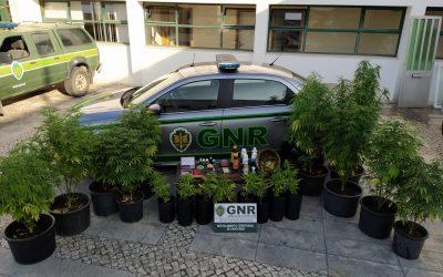 Dois homens detidos por tráfico de estupefacientes em Almeirim