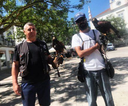 Falcões combatem praga de pombos no Centro Histórico de Santarém