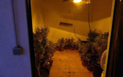 Denúncia por maus-tratos animais dá origem a detenção de mulher por cultivo de cannabis