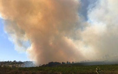 Incêndio consumiu cerca de 21 hectares de floresta em Rio Maior