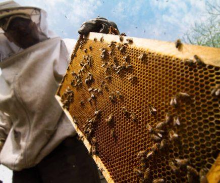 Apicultores obrigados a declarar colmeias em Setembro
