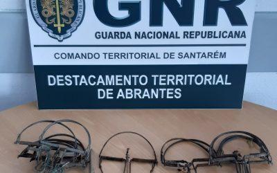 Homem de 51 anos detido pela GNR por caça ilegal
